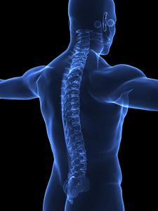 Human Spine X-rays